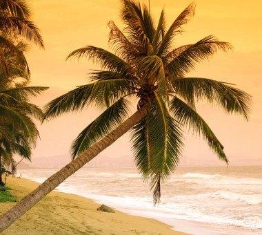TOP 6 des plus belles plages de la Floride