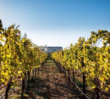 Napa Valley: les 7 meilleurs vignobles à visiter