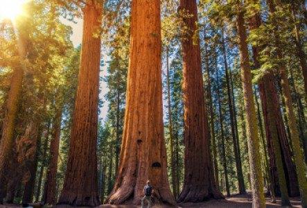 Les 10 incontournables du parc Séquoia et Kings Canyon