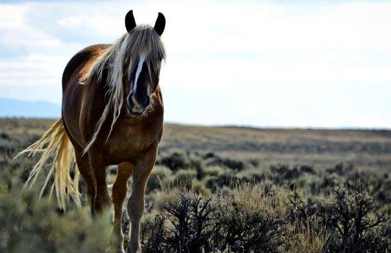 Les chevaux sauvages sur la route vers Adobe Town
