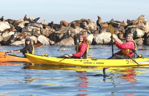 Randonnée en Kayak dans la Baie de Monterey