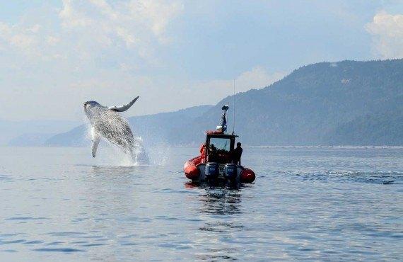 1-tadoussac-saut-baleine-bosse