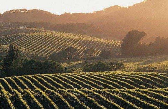 Les vignobles de Napa Valley