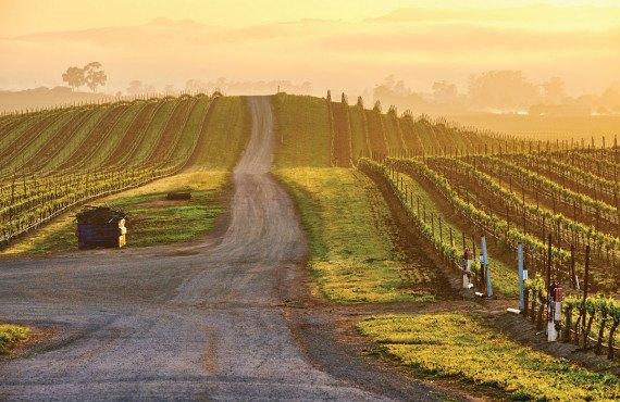 1-vallee-des-vins.jpg