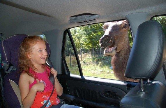 Parc animalier Oméga - Montebello, QC