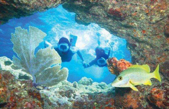 Observation des bancs de coraux