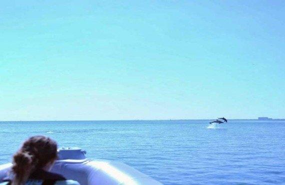 Biscayne Bay Dauphins