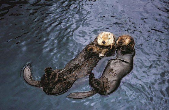 3-aquarium-vancouver