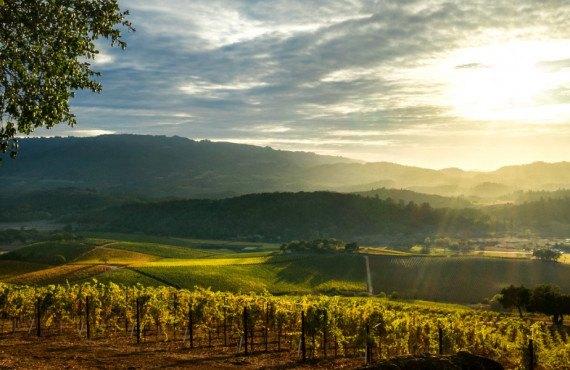 La vallée des vins