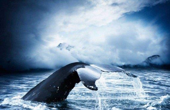 3-observation-baleine-tadoussac