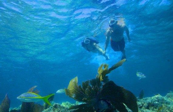 Le paradis des plongeurs