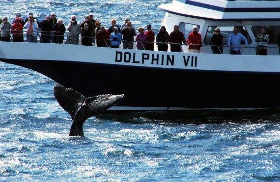 Safari aux baleines - Boston, MA