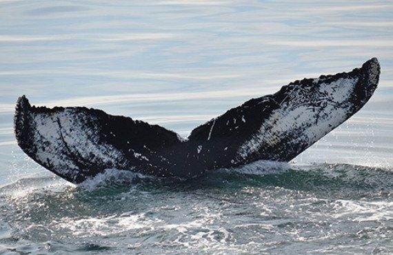 3-safari-baleines-boston.jpg