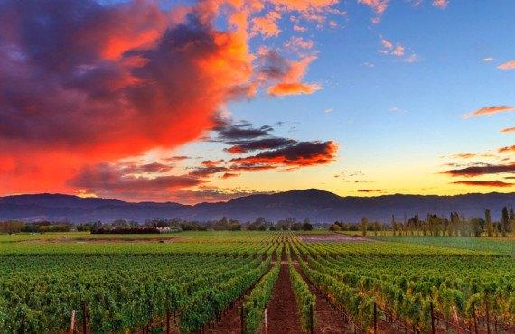 Coucher de soleil sur Napa Valley