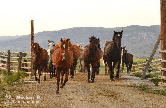 Chevaux du Rockin' R Ranch