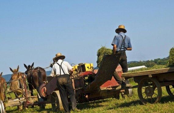Les Amish agriculteurs