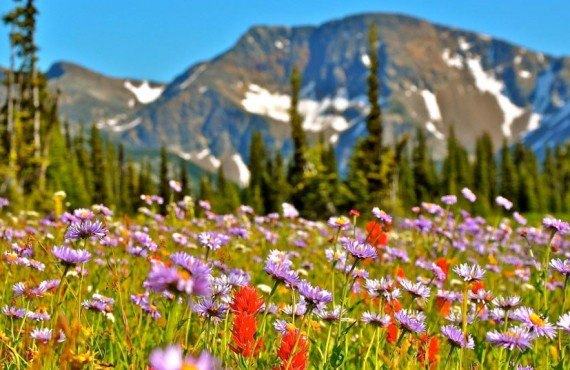 4-fleurs-alpines-mont-trophy