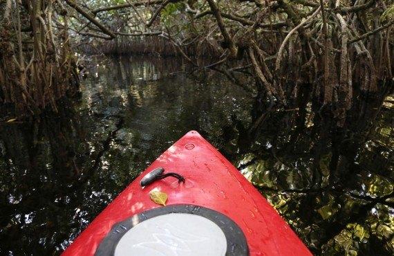 Kayak dans les Everglades