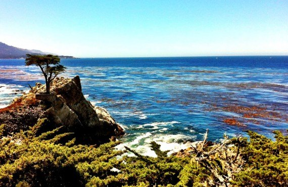 Lone pine point, 17 mile drive