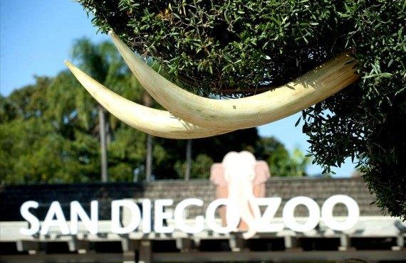 Le zoo de San Diego