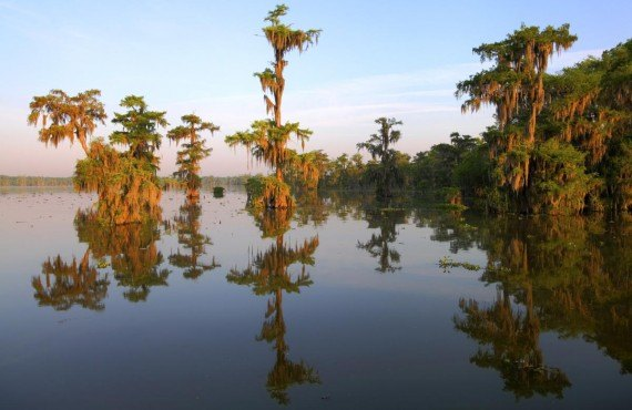 Bayou du Lake Martin