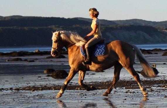 Équitation sur les rives du fleuve Saint-Laurent