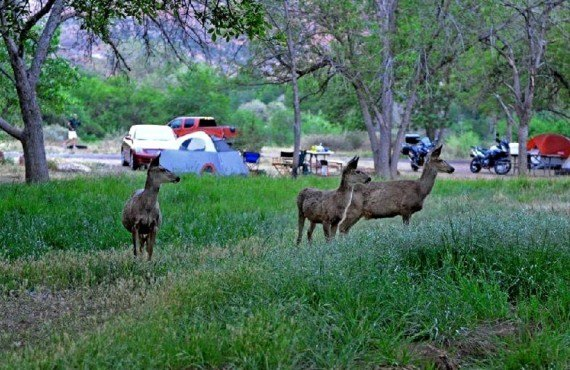 Camping du Parc Zion - Animaux en liberté