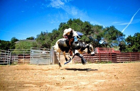 Démonstration monte d'un taureau au Rancho Oso