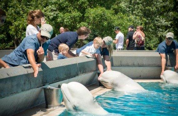 Le meilleur: rencontre avec les dauphins marineland duree