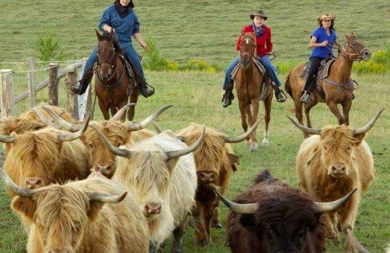 Pourvoirie du Baluchon - Cowboy dans l'âme