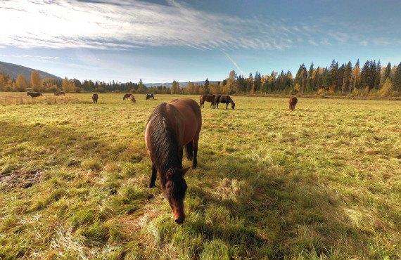 Les chevaux du ranch