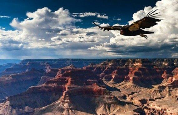 Vue du Grand Canyon à proximité