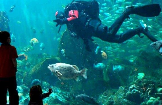 aquarium de vancouver vancouver canada prix forfait photos et avis