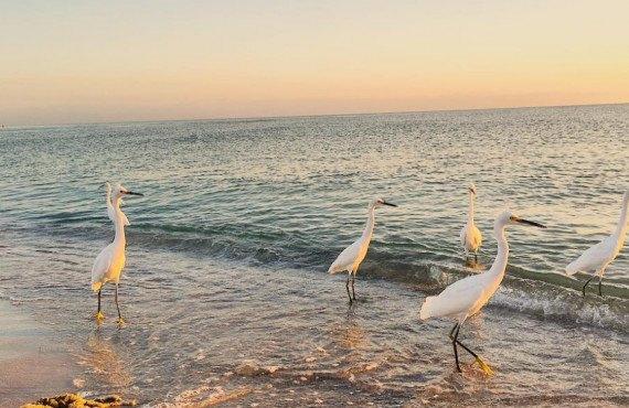 Coquillages sur la plage à Sanibel Island