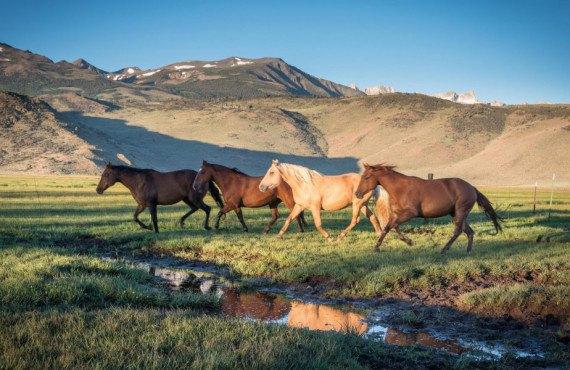 Hunewill Ranch en Californie