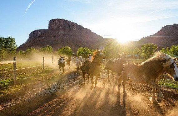 Chevaux du ranch Sorrel River proche de Canyonlands