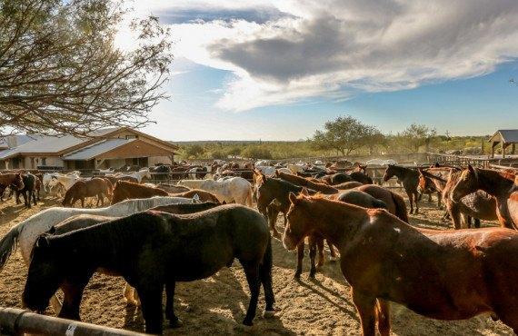 Ranch en Arizona