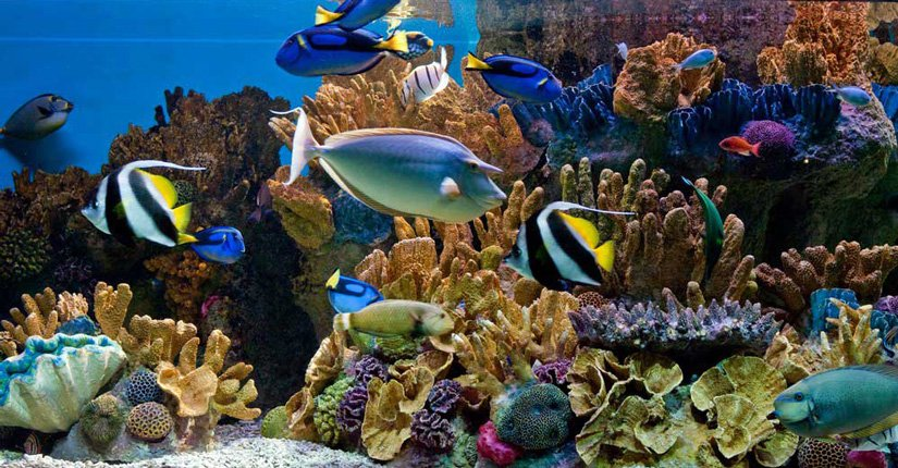 New England Aquarium - Boston, MA