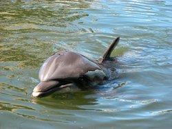 Obesrvation des dauphins