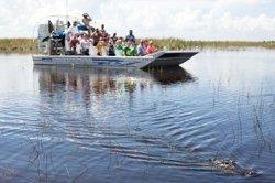 Safari d'observation aux alligators
