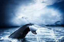 Safari aux baleines - Santa Barbara