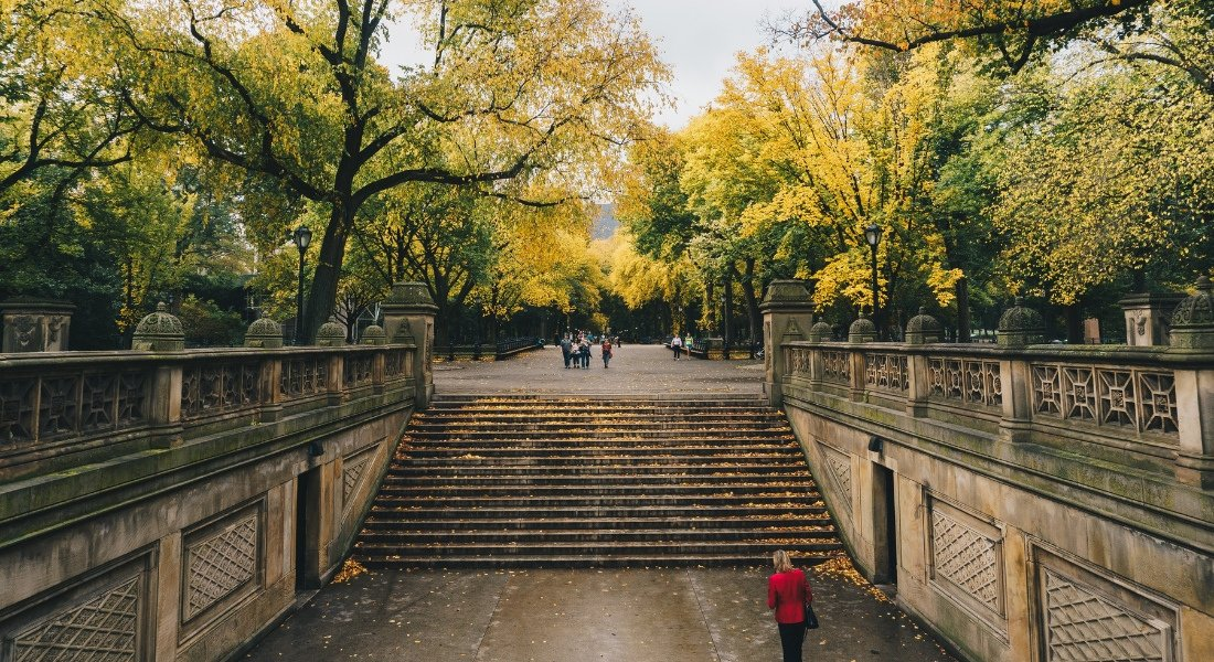 Central Park  New Yrok