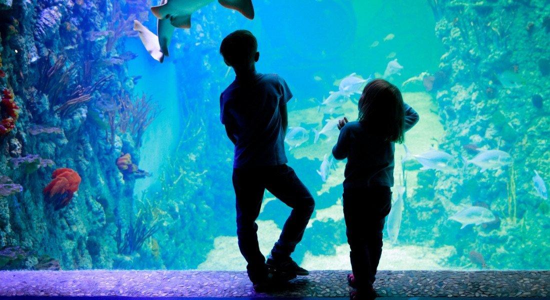 Enfants devant un bassin de poissons à l'aquarium