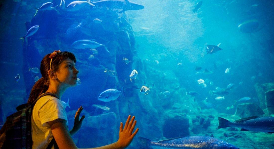 Jeune fille devant un bassin de poissons à l'aquarium de Los Angeles