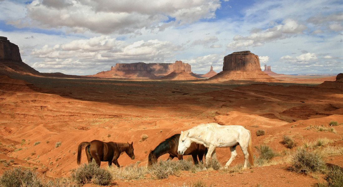 Chevaux sauvages à Monument Valley