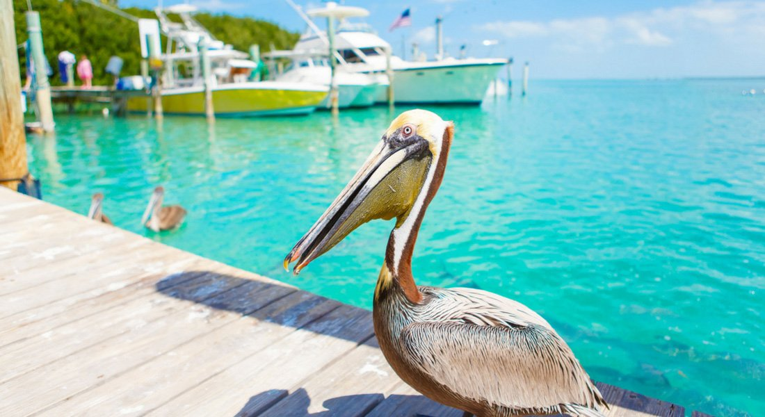 ultime road trip floride key west oiseaux