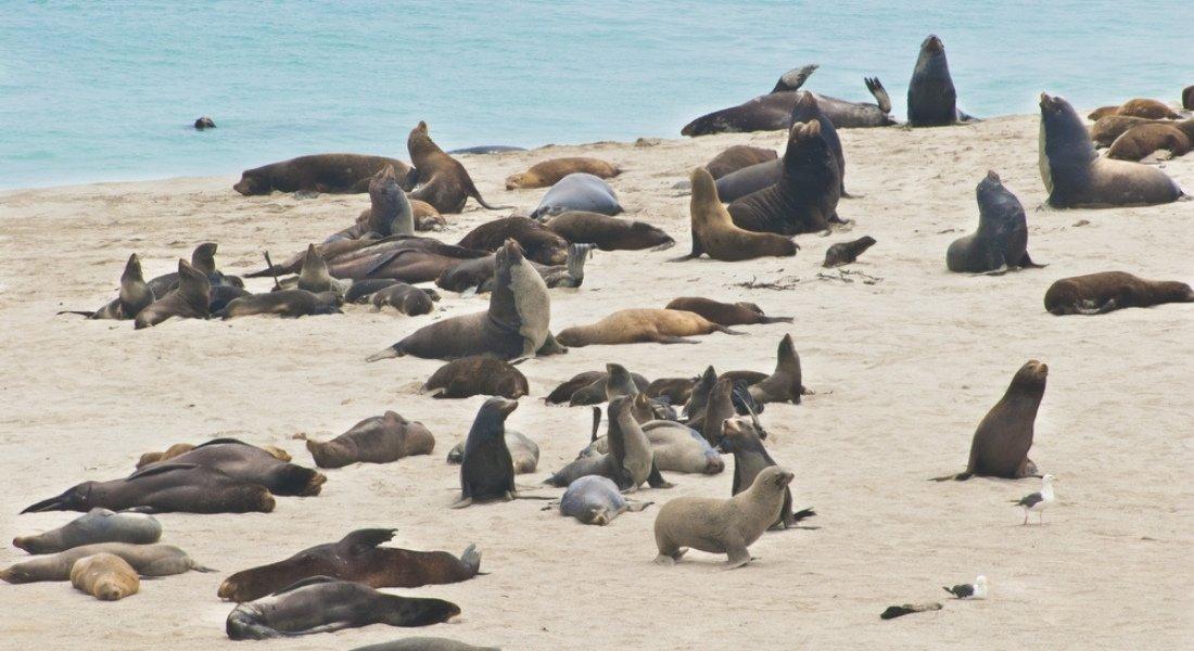 Visite guidée des Channel Islands de Californie