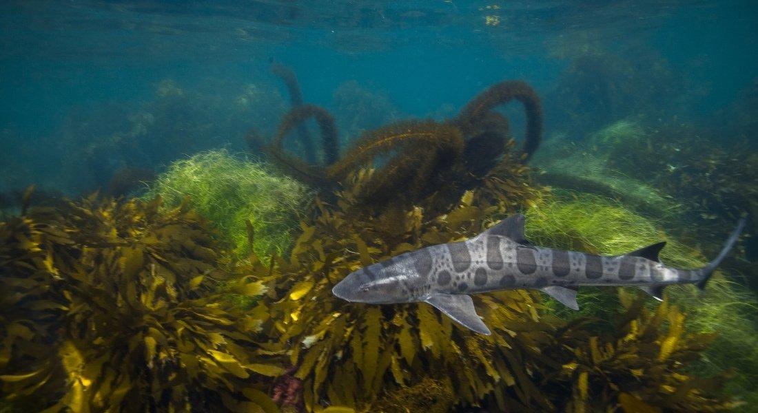 Plongée aux Channel Islands de Californie