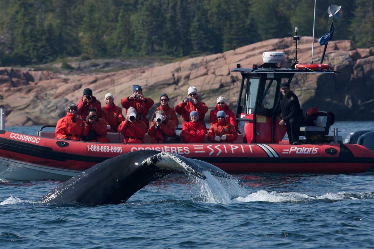 Observation des baleines en zodiac à Tadoussac