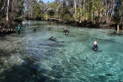 La plongée en apnée, Crystal River